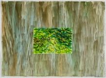 Écorce gris-vert et feuillage vert