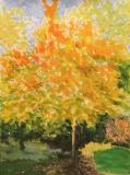 Le cerisier en octobre