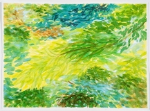 Feuillage jaune et conifères