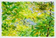 Feuillage et branches, matin d'août