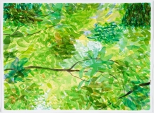 Feuillage et branches, juillet