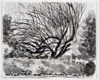 L'arbre noir derrière la haie