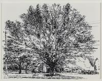 Grand arbre, rue Beaumont, soir de fin d'été