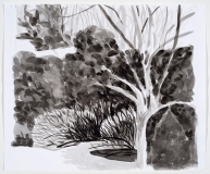 Cerisier et arbustes en hiver