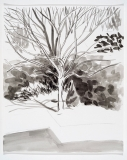 Le cerisier sur neige