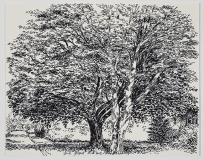Deux arbres, sombres et clairs, rue des Peupliers